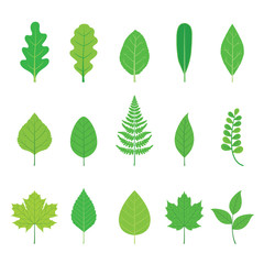 Set Of Green Leaves With Different Shapes