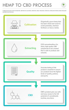 Hemp to CBD Process vertical business infographic vertical illustration about cannabis as herbal alternative medicine and chemical therapy, healthcare and medical science vector.