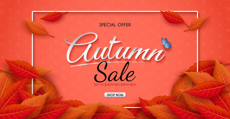 Autumn sales banner design with colorful seasonal fall leaves. and concept autumn advertising. for shopping discount promotion, frame leaflet or web banner. and used as illustration or background.
