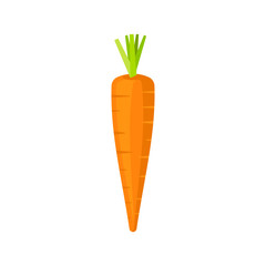 Carrot isolated on white background. Vector illustration.