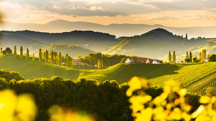 Canvas Prints Yellow South styria vineyards landscape, near Gamlitz, Austria, Eckberg, Europe. Grape hills view from wine road in spring. Tourist destination, panorama
