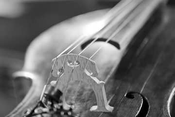 Wall Mural - Fragment of a violin close-up in black and white