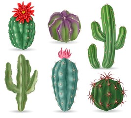 Realistic cactus. Decorative desert cactuses plants for mexican landscape and house interior. 3d succulent cacti isolated vector set. Illustration cactus mexican, succulent cacti with flower