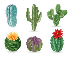 Realistic cactuses. Decorative desert exotic cactus prickly plants. Wild and houseplant succulent cacti. 3d isolated vector set. Home interior cactus, green cacti with prickly illustration
