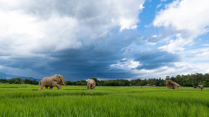 In a rice field with a picture of an elephant made of straw at Huai Tung Tao, Chiang Mai, Thailand
