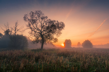 Photo sur Plexiglas Marron chocolat A tree during a misty sunrise near Piaseczno
