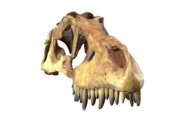 3D render of Tyrannosaurus Rex Skull isolated on white.