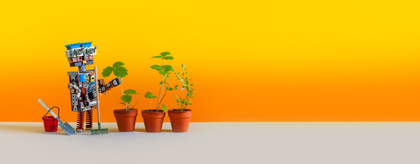 Automation agriculture robotic gardening technology. Robot gardener with bucket shovel rake and sprouts of wild strawberries in clay flower pots. Yellow background. Copy space for text
