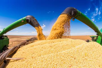 Soybean harvesting machines unloading seeds with blue skies