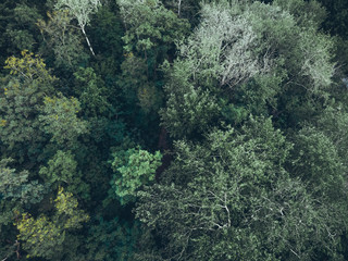 forest from the top view - picture taken by a drone
