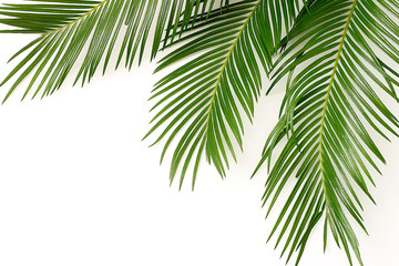 Acrylic Prints Palm tree palm leaves on white background