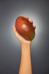 Hand holding a mango fruit on grey background