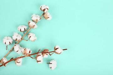 Cotton flowers on mint background