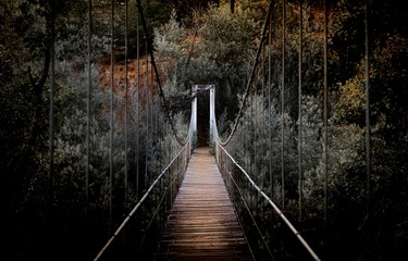 Staande foto Bruggen Beautiful horizontal shot of a long bridge surrounded by high trees in the forest