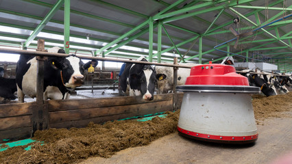 The robot farmers are programmed to work in the farm premises for animal feeding.