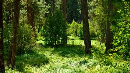 A meadow near the Metolius River, Oregon