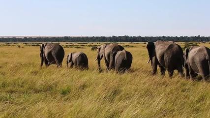 Wall Mural - Group of elephants walking on the savannah. Africa. Kenya. Tanzania. Serengeti. Maasai Mara.