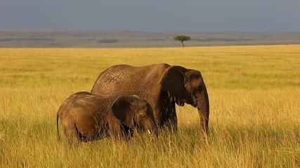 Wall Mural - Baby elephant with his mother in the savannah. Africa. Kenya. Tanzania. Serengeti. Maasai Mara.