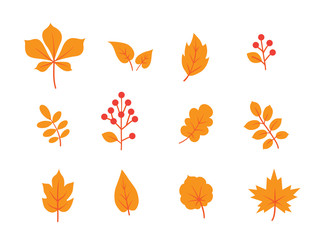 Autumn leaves set. Fall leaf and berries icons. Floral nature symbols over white background.