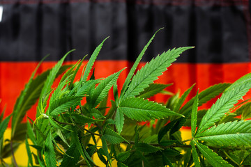 Cannabis plant and German flag