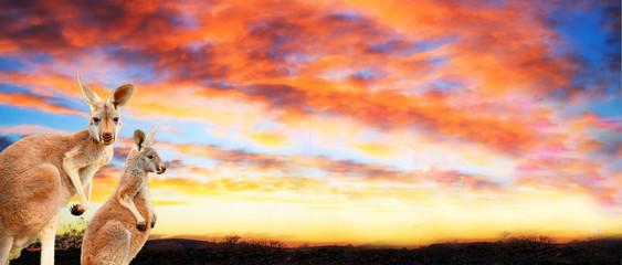 Kangaroos at sunset with pink yellow clouds