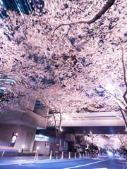 Fototapete - 東京都 アークヒルズの夜桜