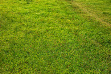 Beautiful green grass in park as background