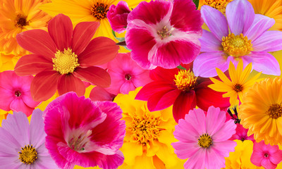 Background from bright multi-colored autumn flowers. Collage