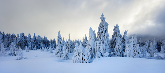 Winter near Mount Brocken, Snow Clouds approaching, Fir Trees Covered by Snow, Harz National Park, Germany