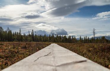 Fotomurales - Wooden planks keep the hiking trail from flooding in Sweden. Jamtland, Sweden.