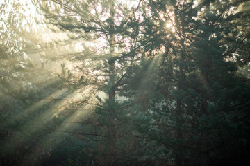 Image of dense forest with rays of sun.