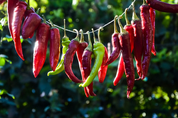 In de dag Hot chili peppers red hot chili pepper hanging on a thread and dried in the sun on a warm autumn day