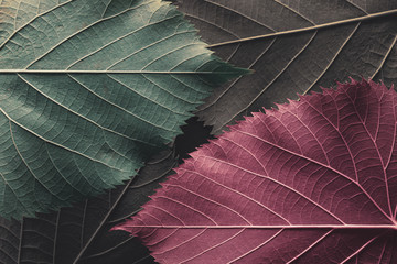 Autumn leaves, natural background.