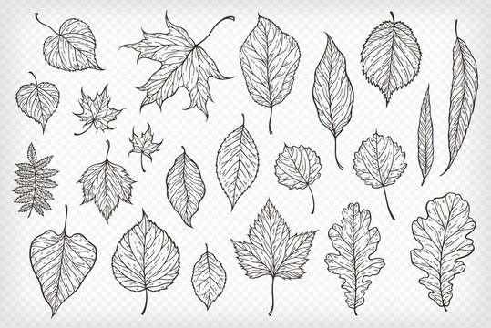 Falling leaves vector illustration. Decorative graphic black outline autumn leaves collecton isolated on white background. Hand drawn organic lines