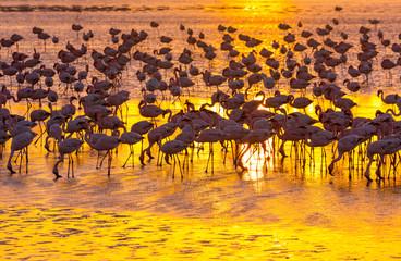 Foto op Canvas Afrika Flamingos, Salinas, Walvis Bay, Namibia, Africa