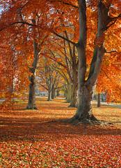 Foto auf Leinwand Ziegel Autumn. Gold Trees in a park