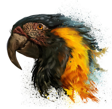 Parrot head and spray. Watercolor painting