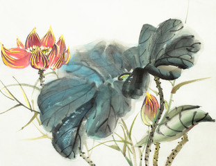 delicate lotus flower