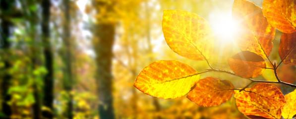 Spoed Foto op Canvas Olijf golden leuchtende Herbstblätter imSonnenlicht