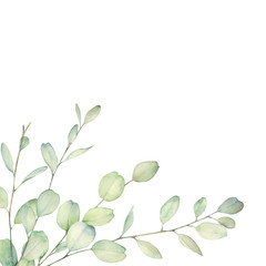 Watercolor floral card with eucalyptus branch. Hand drawn botanical illustration. Herbal plant