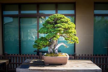 Papiers peints Bonsai Japanese bonsai tree in Omiya bonsai village at Saitama, Japan
