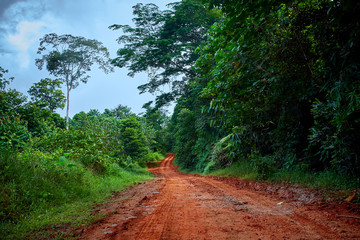 Muddy road in the rainforest of central America.