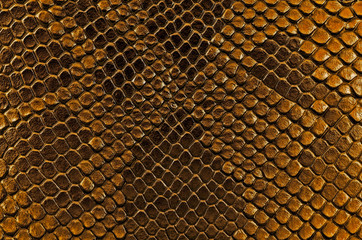 Wall Mural - Brown snake skin, as background. Reptile.