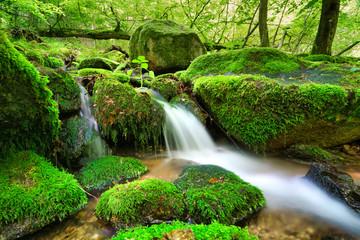 Fotorollo Grun Quelle im Odenwald