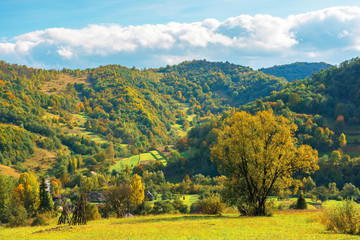 wonderful rural landscape in mountains. sunny autumn weather with clouds on the sky. tree in yellow foliage on the grassy pasture. village down in the distant valley. beautiful carpathian countryside