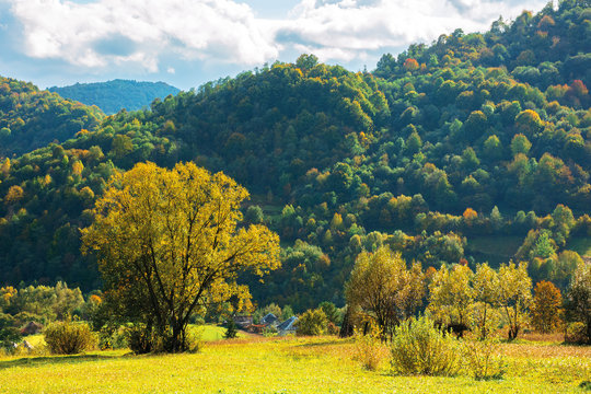 wonderful rural landscape in mountains. sunny autumn weather with clouds on the sky. trees in yellow foliage in the grassy meadow. village at the foot of the forested hill. beautiful carpathian countr
