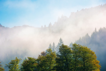 wonderful autumn weather in mountains. distant forested hills in thick fog. sunny morning in carpathians. beautiful nature scenery