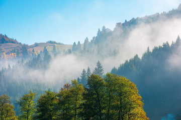 wonderful autumn weather in mountains. distant forested hills in hazy mist. sunny morning in carpathians. beautiful nature scenery