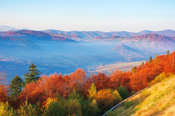 beautiful morning scenery in mountains. light passes through rising fog in the distant valley. wonderful autumn weather. trees on the near slope in colorful foliage.