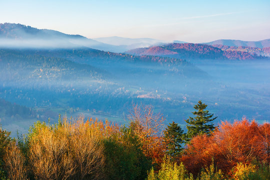 beautiful misty autumn morning in mountains.  forested hills in fall foliage. fog rising above the valley. sunny weather with clear azure sky. magical moments of carpathian rural landscape